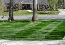 Landscape Maintenance, Fescue Installation, striping lawn